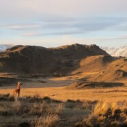 """The Ecologist Magazine"": Running into the Grassland Queen of Patagonia"