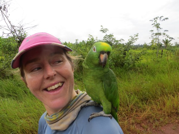 Mealy parrot lands on my shoulder in Brazil!