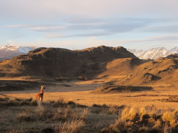 Amazing South American wildplaces. A guanaco looks over the Chacabuco Valley we are raising money for.